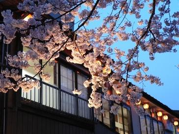 Sakura200415
