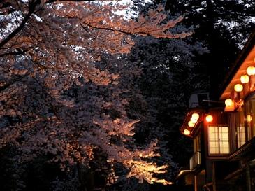 Sakura2004153
