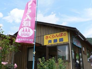 Sakuranbo1