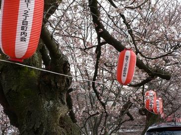 Sakura04082