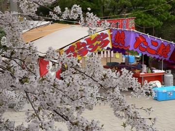 Sakurahakusan2