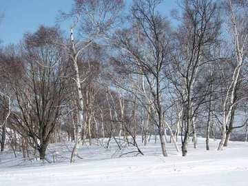ski_03062